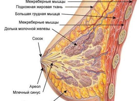 Мастопатія молочної залози у жінок: причини, симптоми, діагностика і лікування