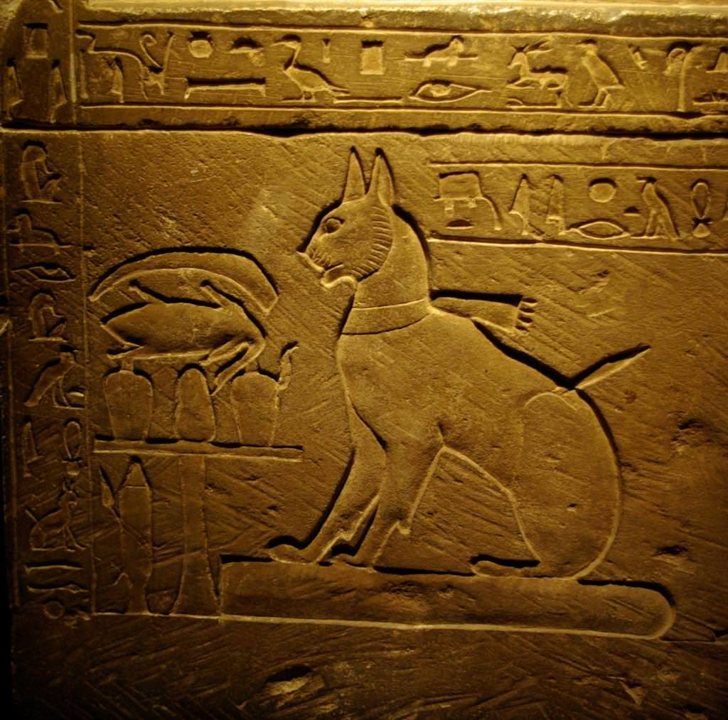 Єгипетська мау: опис породи, характер і фото