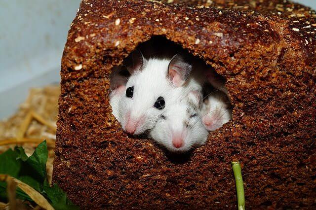 До чого сняться миші у сні?