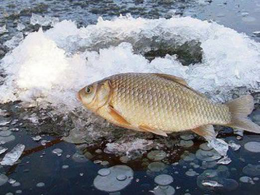 Ловля карася взимку: особливості, цікаві факти та рекомендації