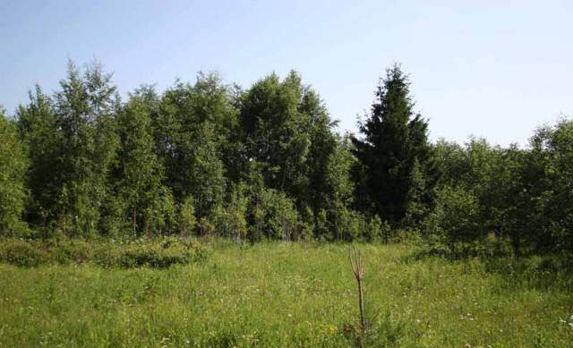Селище Саперне, Ленінградська область: військова частина реабілітаційний центр