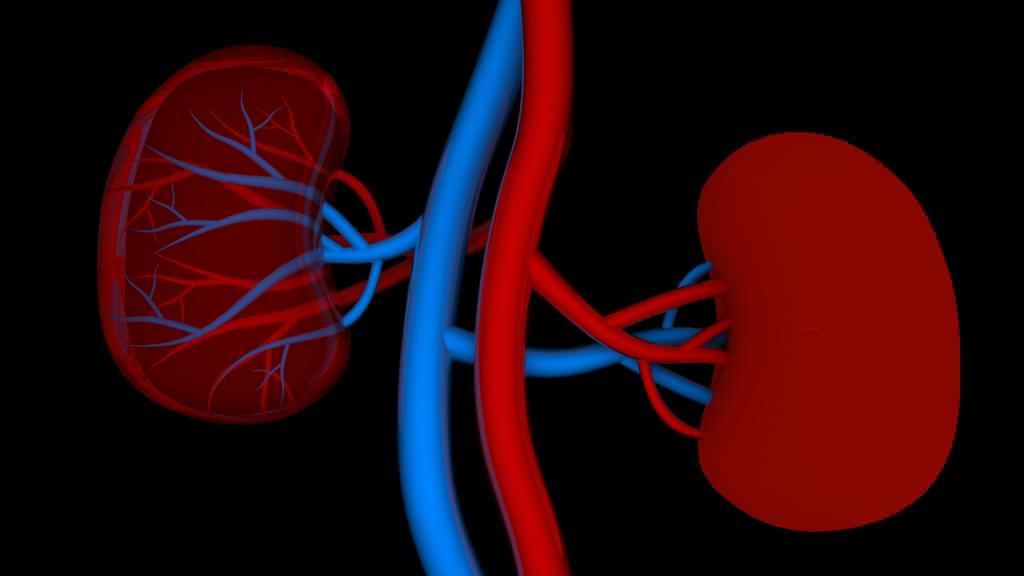 Нирковий тиск: симптоми, можливі причини, лікування та діагностика