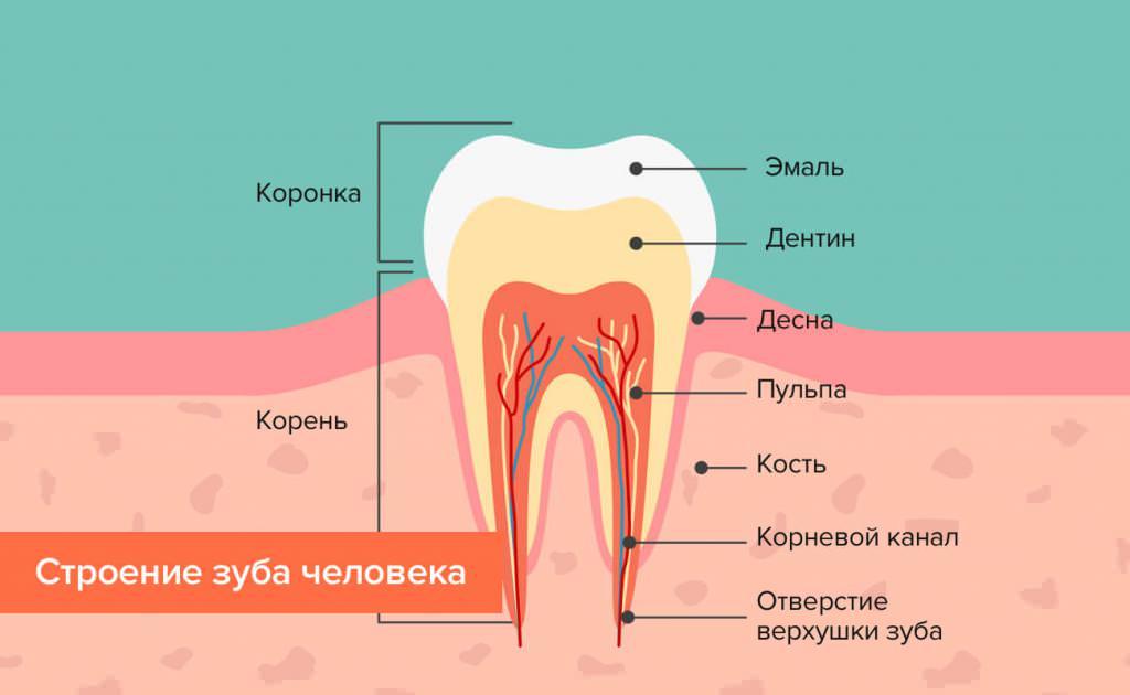 Пришеечный карієс  причини виникнення 6a22de9078c03