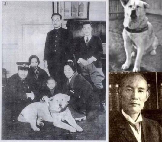 Реальна історія Хатіко, самого вірного і відданого пса у світі